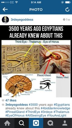 Eye of Horus; Third eye; correlates to the pineal gland in the brain; interesting; ancient Egyptian knowledge; African Egyptian  and Indian connection