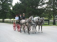 A beautiful lady's carriage turnout of three rose grey Arabians at the Kentucky Horse Park. Kentucky Horse Park, Horse Stuff, Beautiful Women, Horses, Grey, Animals, Gray, Animales, Animaux