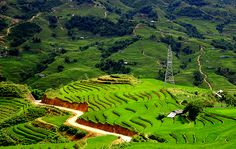 Sapa is the best place for tours in Vietnam. Sapa is wonderful for trekking tours in vietnam, biking tours in Vietnam. Sapa has wonderful weather for tours