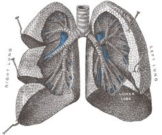 http://www.examiner.com/article/lung-dysfunction-and-occupational-jobs-is-there-any-link
