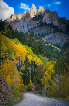 ❥ Aspens on hillside in the San Juan mountains of Colorado~ on the drive from Durango to Silverton