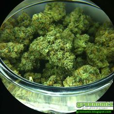 Buy OG Kush is an American marijuana classic, a Southern California original with some of the highest THC levels in the world. With a sativa/indica. Cannabis Seeds Online, Cannabis Seeds For Sale, Medical Cannabis, Cannabis Oil, Growing Marijuana Indoor, Cannabis Growing, Cannabis Plant, Autoflowering Seeds