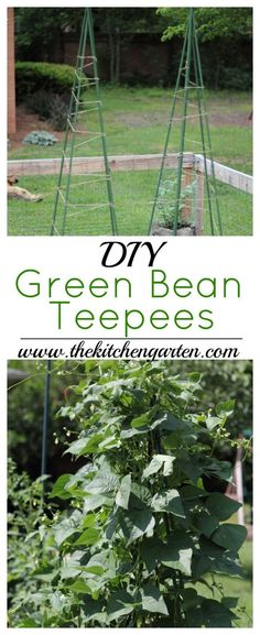 No room in the garden? Grow your beans vertically using these Easy DIY Green Bean Teepees! Beauty and function in your garden space! via @cpjsouthern