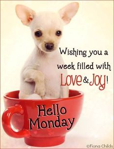 Wishing You A Week Filled With Love And Joy monday monday quotes happy monday monday blessings happy monday quotes… Happy Monday Quotes, Happy Monday Morning, Monday Morning Quotes, Good Morning My Friend, Morning Memes, Monday Humor, Good Morning Funny, Good Morning Good Night, Gd Morning