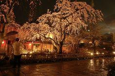 japan flower festival