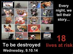 TO BE DESTROYED - 09/10/14 PITTIES ARE IN DANGER AGAIN. THERE ARE FAR TOO MANY TODAY!!! ALL THESE DOGS COUNT ON US!!! LET'S NOT LET THEM DOWN!!! PLEASE OPEN YOUR HEARTS AND PLEDGE, TAKE THEM HOME, BUT BE QUICK AS TIME IS TICKING AWAY. PLEASE BE QUICK WHEN MAKING UP YOUR MIND!!  https://www.facebook.com/Urgentdeathrowdogs/photos/a.611290788883804.1073741851.152876678058553/868491576497056/?type=3&theater