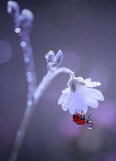 Not warm & fuzzy but.it's a lady bug! Bokeh Photography, Amazing Photography, Cool Photos, Beautiful Pictures, Fotografia Macro, Foto Art, Jolie Photo, Nature Animals, Amazing Nature