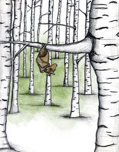 The Bat and his Birch Trees by Erin Hough