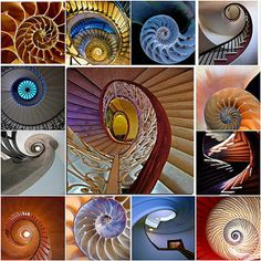 Spiral mosaic Spiral mosaic This one will keep you guessing. Some are spiral staircases some are not. Collection of spirals drawn from my favorites. Please view these images individually. You will meet some f Patterns In Nature, Textures Patterns, Spirals In Nature, Divine Proportion, Fibonacci Spiral, Golden Ratio, Sacred Geometry, Geometry Art, Art Plastique