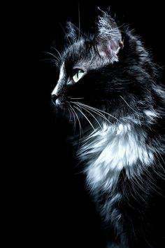 Gorgeous black and white cat....