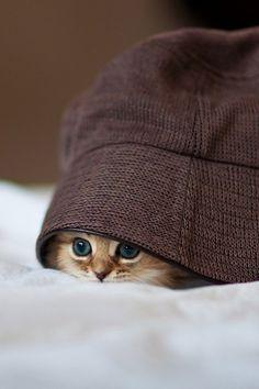 Un petit chat... Trop mignon!!