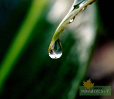 Drop of tears  Photo Credits: Saikat Das    http://www.dreamwanderlust.com/rainy-days.php