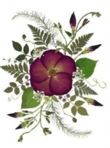 Cómo hacer cuadros con flores secas prensadas por nosotros   Aprender manualidades es facilisimo.com