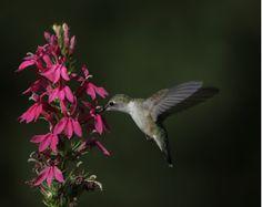 Bird_ShutterPriorityMode