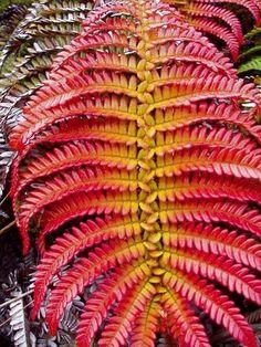 Bonsai Seeds, Bonsai Plants, Garden Plants, Garden Types, Colorful Plants, Exotic Plants, Exotic Flowers, Beautiful Flowers, Agaves