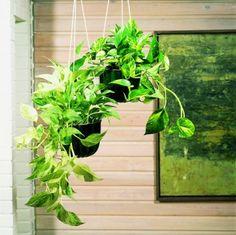 観葉植物初心者におすすめ!ポトスを思いっきり楽しむ5つの方法