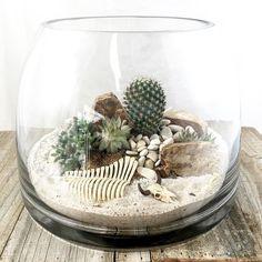 Busy day making desert scenes. I did get stuck a few times by my little cactus friends! #cactus #desert #terrarium #mammillaria #brisbaneflorist #skulls #skeleton #desertlife #succulents #minigarden #flowerheartdesigns #brisbaneterrariums by flowerheartdesigns