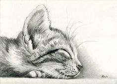 sleeping Kitten by art-it-art.devian… on Bleistift Zeic… sleeping kitten by art-it-art.devian … on … graphite, pencil drawing on 200 grams of artist paper … Tiger Kitten … original Pencil drawing … Size: 18 x 25 cm – 7 x 10 inches Animal Sketches, Animal Drawings, Cool Drawings, Drawing Sketches, Drawing Ideas, Cat Sketch, Sketching, Drawings Of Cats, Kitty Tattoos