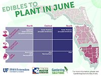 , A graph showing vegetables that can be planted in June for Florida. , A graph showing vegetables that can be planted in June for Florida