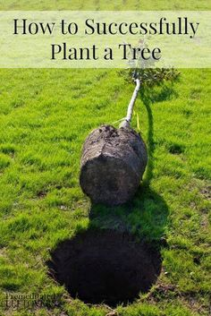 Things You Need To Know To Plant A New Tree