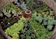 Use an old wagon wheel to create an herb bed.  from The Urban Farm & Garden on Facebook.