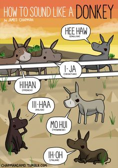 HOW TO SOUND LIKE A DONKEY In the UK, donkeys are required by law to have passports.I guess we got bored and just decided to pass whatever laws came to mind.