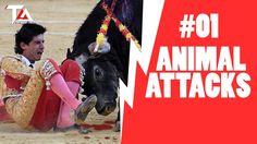 Animal Attack Videos #1