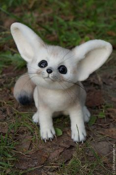 Baby Animals Pictures, Cute Animal Photos, Cute Fantasy Creatures, Weird Creatures, Cute Fox, Cute Cats, Felt Animals, Animals And Pets, Cute Stuffed Animals
