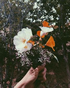 Pick flowers not fights! Collin and I planted a bunch of wildflowers last month (some for the bees and some for us) and they are SO…