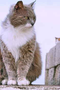 ...The spy being spied on...