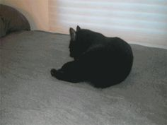 "GIF: ""28 Cats Having A Way Worse Day Than You"" -- so hilarious."