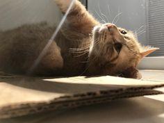 Yellow cat// Pinterest//tumblr// cute//