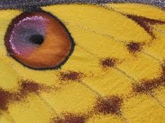 moth wing close up eye Moth Wings, Insect Wings, Moon Moth, Butterfly Frame, Magical Creatures, Madagascar, Close Up, Insects, Colours