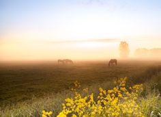 Horses in the mist........ by Betuwefotograaf
