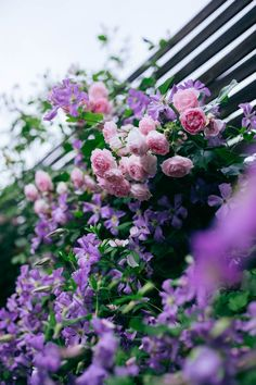 Pergola, Plants, Outdoor Pergola, Plant, Planets