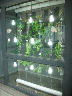 Window Farm in Eyebeam's window gallery