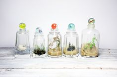 self sustaining terrariums