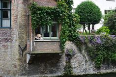 Meet Bruges' most famous citizen! This dog spends most days lazing about in this window. Keep an eye of for him if you do the riverboat! Gift From Heaven, Cute Cottage, Landscape Drawings, All Gods Creatures, Tropical Houses, Travel Around The World, Great Photos, Aesthetic Wallpapers, Beautiful Places