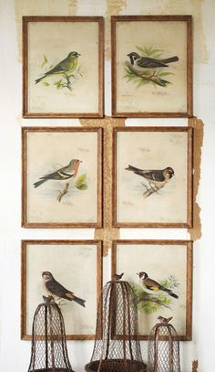 Vintage Bird Prints: Set of 6