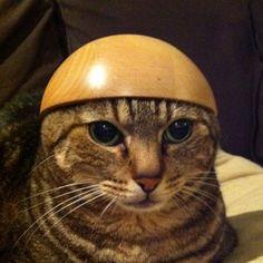 ん? 何か? #cat #neko #猫 on Twitpic