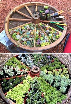 wagon garden planters recycle an old wagon wheel for a divided succulents bed garden wagon planters