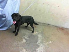 http://www.examiner.com/article/suspicious-behavior-at-san-bernadino-shelter-more-missing-dogs    Dead dogs at San Bernadino City Shelter...read more....
