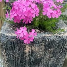 Learn how to make hypertufa planters on my page. I have the recipes and procedures, even videos so that you can make one easily! Also Draped Hypertufa here!