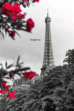 Splash Photography, Color Photography, Color Splash Photo, Red Images, 2 Colours, Red Color, Drawings, Gifs, Graphics