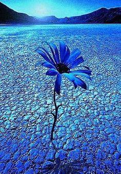 Sára oldala - Képgaléria - Virágok - Kék virágok - kek-virag-sivatagos