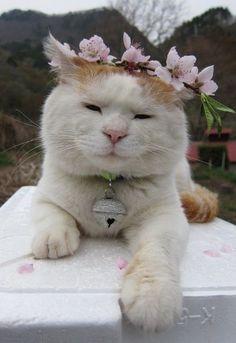 bohemian kitty, flowers & bell ESTA GATITA SE LLAMA OLA....es medio hippy…