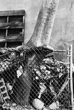 ZOE LEONARD Numb, Art Inspo, Blind, Street Photography, Contemporary Art, Surface, Fine Art, Texture, Black And White