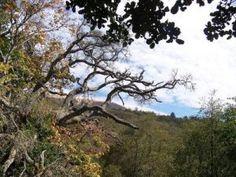 Big Sur: Hiking in condor country - San Jose Mercury News