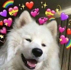 New memes de amor gatos 68 Ideas Cute Cat Memes, Cute Animal Memes, Cute Love Memes, Funny Animals, Cute Animals, Funny Memes, Meme Meme, Cute Dog Wallpaper, Memes Lindos