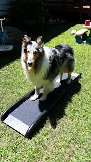 The Pet Parade How To Train A Dog To Walk Up A Ramp Into A